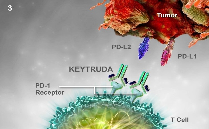 keytruda in Dano Health-T cell reaction